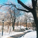 The snow in central park is looking good this weekendhellip
